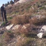 Thousands of Jewish fake graves for the purpose of confiscating Waqf land